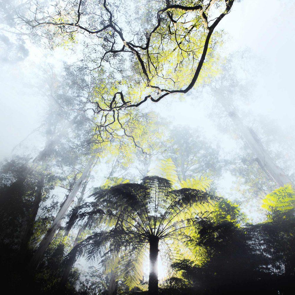 ilari_tree