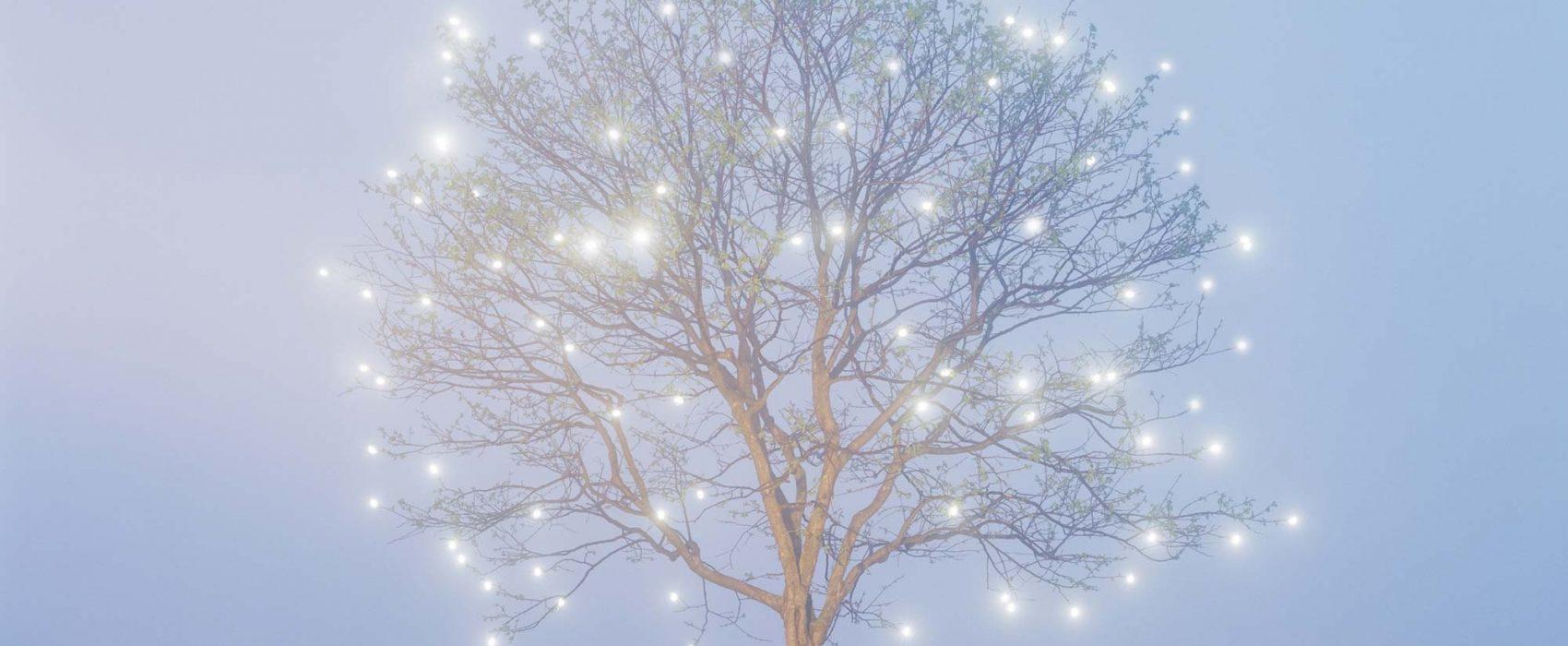 leejeonglok_tree-of-life